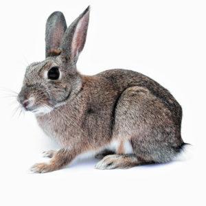 Dla królików